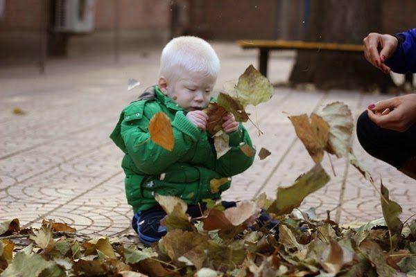 2014 11 leaf